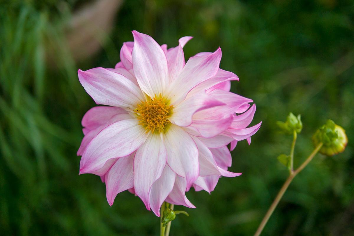 Artejanis Flower: Artejanis - A School of Life Crafting